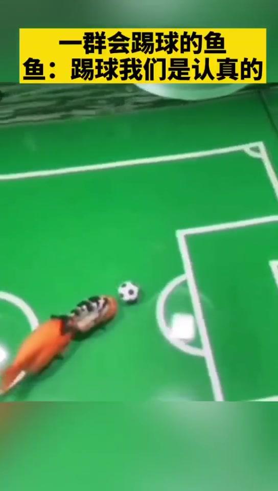 一群会踢球的鱼:踢球,我们是认真的!